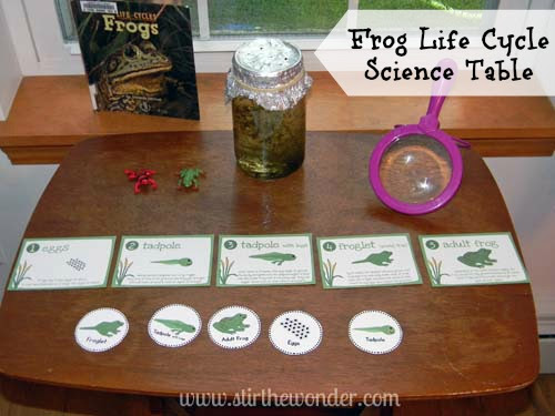 Frog Life Cycle Science Table | Stir The Wonder