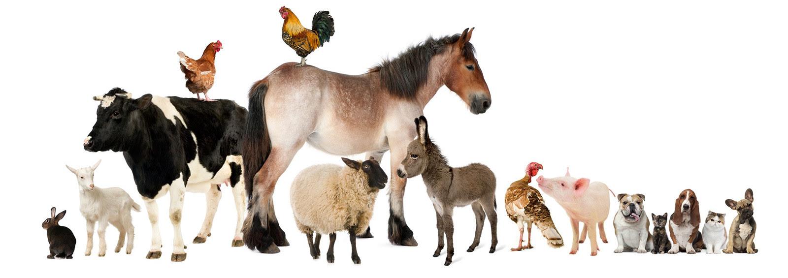 """Résultat de recherche d'images pour """"tout les animaux de la ferme"""""""