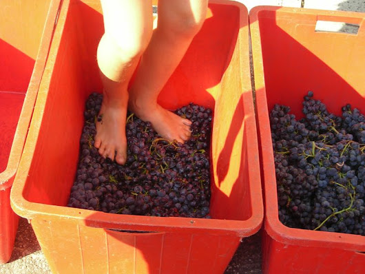 Grape Stomp highlights allure of Texas Wine Trail