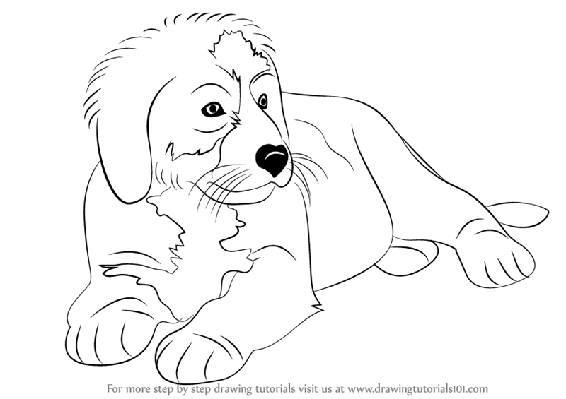 how to draw Bernese Mountain Dog step 0