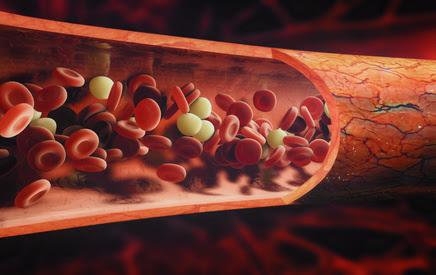 Albumin-Blutwert • Was hohe und niedrige Blutwerte bedeuten