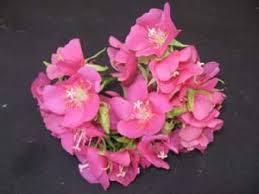 http://tbn1.google.com/images?q=tbn:lUvtR7E_kKpYmM:http://www.rareflora.com/dombeyaxsemi.jpg