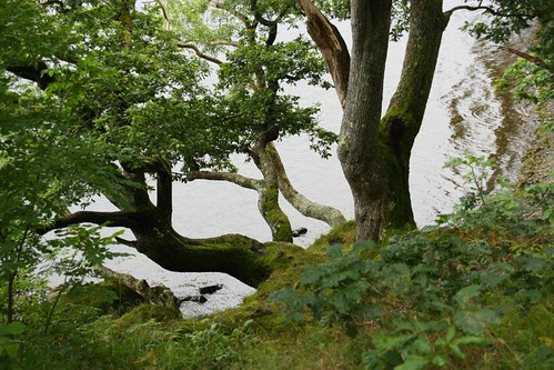 Tree at Derwentwater