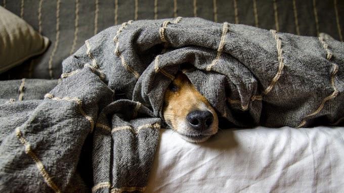 Los cinco comportamientos del perro ante los que hay que estar alerta