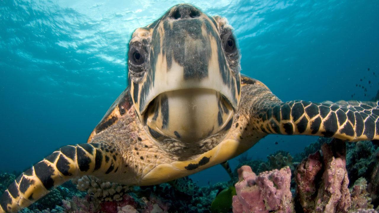 Sea Turtle - The Houston Zoo