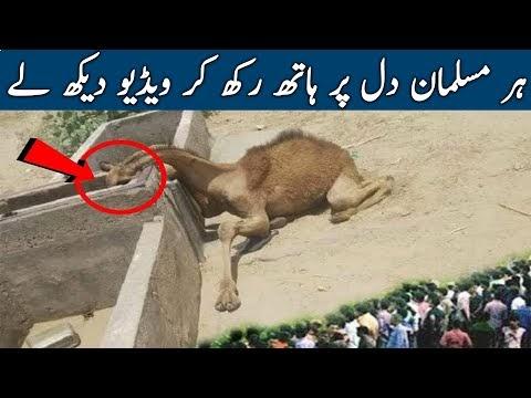 Nabi Pak SAWW Ki Zindagi Ka Waqia Zaroor Sunein - Maktab TV