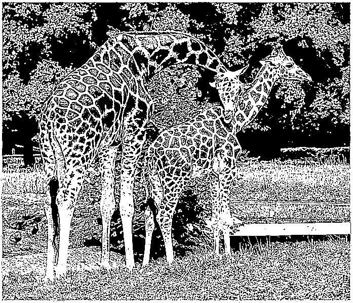 ausmalbilder zootiere zeichnen