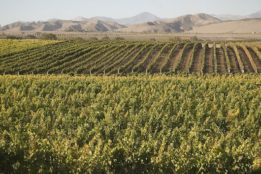 Santa Barbara County wine industry gets special session with supervisors later this month