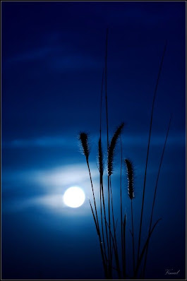 'Bluemoon' by Vimal VP on 500 px | Noche | Pinterest | Moon, Beautiful moon and Sunset