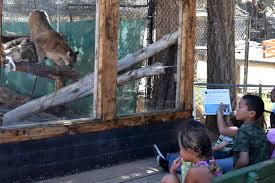 Zoo «Big Bear Alpine Zoo», reviews and photos, 43285 Goldmine Dr, Big Bear Lake, CA 92315, USA
