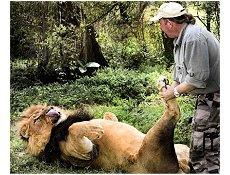 Leão pata