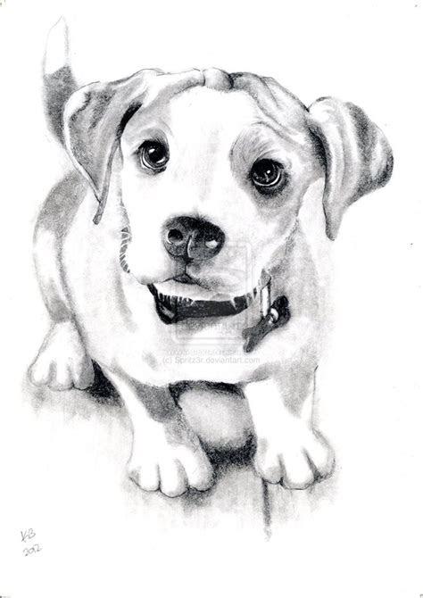 dog sketch  spritzrdeviantartcom  atdeviantart dog