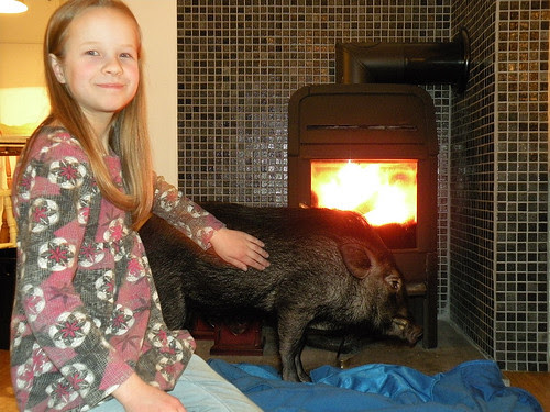 Jostein - a Canadian mini-pig who visited us yesterday :)