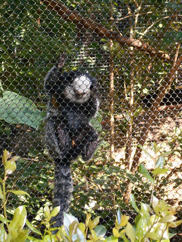 hanging monkey (1)
