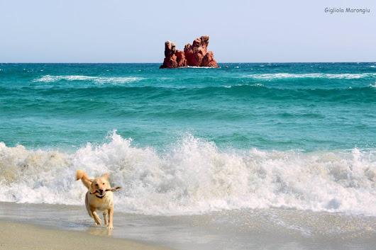 Giorgio pitzalis google - Quando fare il primo bagno al cane ...