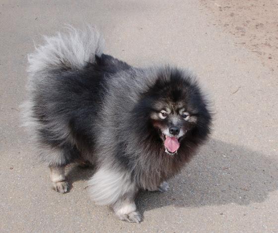 4dog-fluff-tongue.jpg