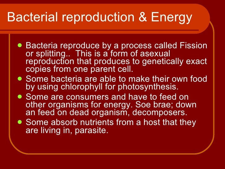 Chapter 7- bacteria