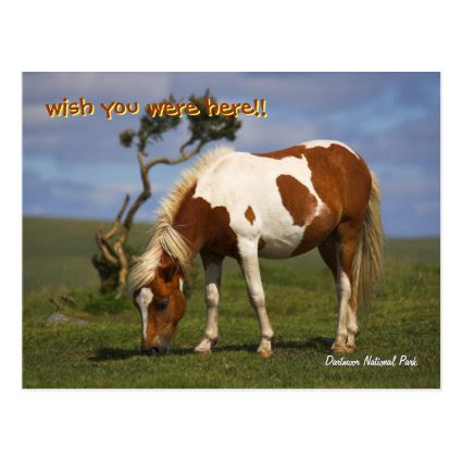 Cute Wild Pony in Dartmoor National Park Postcard