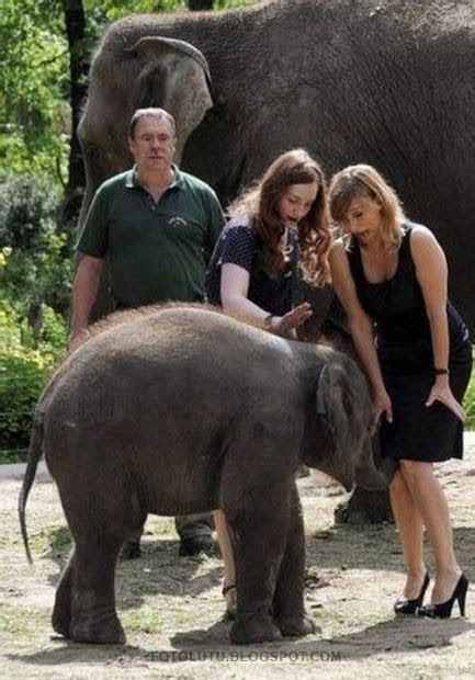 kumpulan foto lucu gajah nakal belalainya masuk  dalem