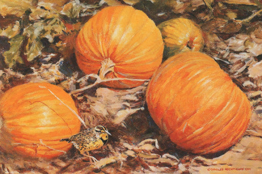 TQ2 Pumpkins and Meadowlark – Charles Beckendorf Gallery