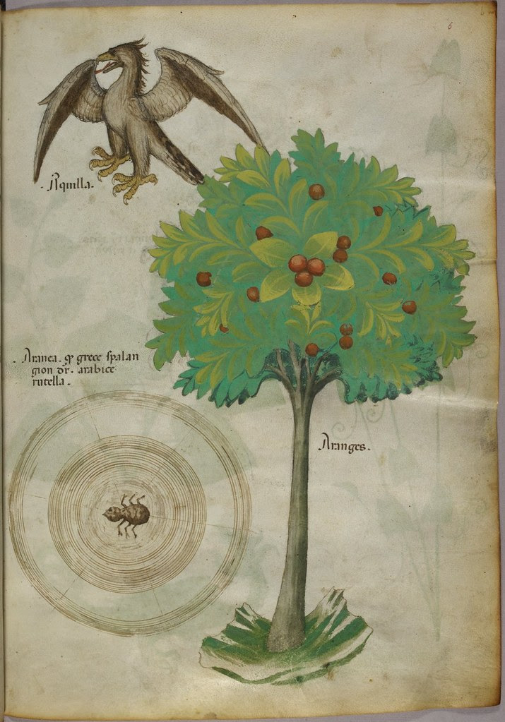 Miniature of a tree, a spider web, and an eagle - (Tractatus de Herbis - Sloane 4016   f. 6)