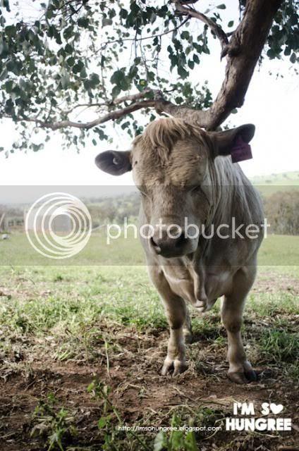 photo 2-king-valley-premium-beef-1944_zpsb26fa319.jpg