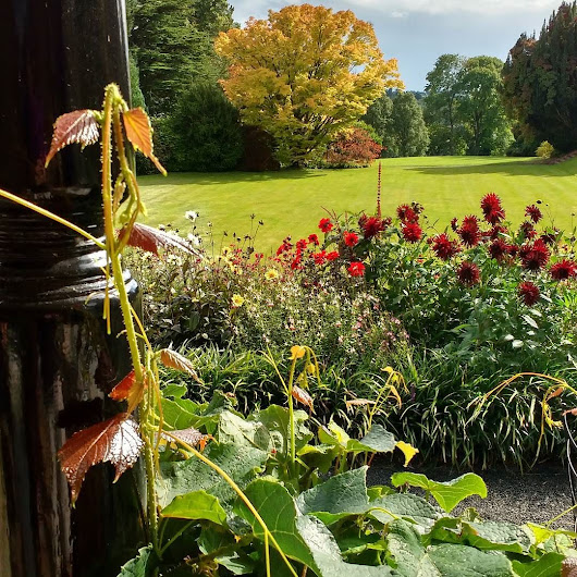 Best view from a #herefordshire #tearoom? At #hergestcroft #gardens . The tea & scones were great too. Visit on our #herefordshire #gardens #cycletour http://ift.tt/1iY4KfS #ukcyclechat #herefordhour #ukcyclingholiday