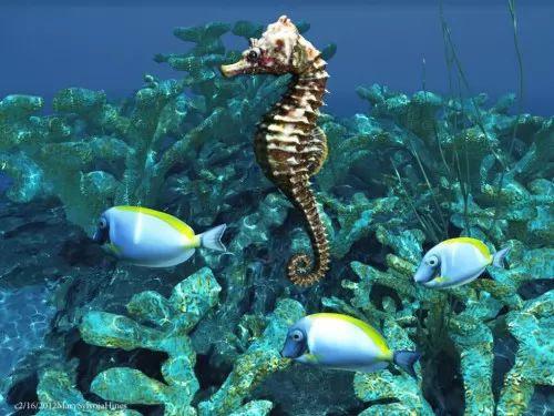 معلومات عن حصان البحر او فرس البحر بالصور والفيديو