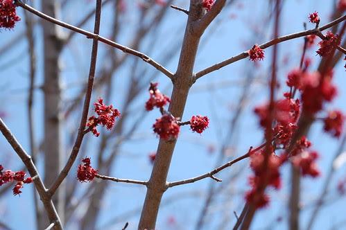 Arboretum in April (11)