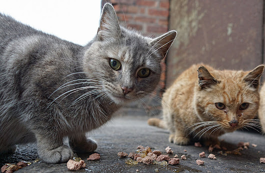 How Cats Are More Social Than We Think - Petful