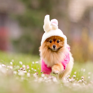 cute puppy image for whatsapp