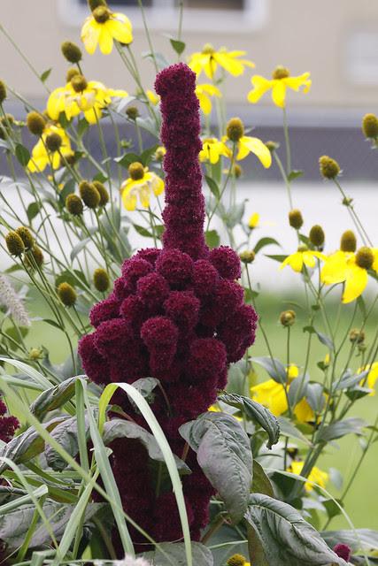 the finger flower