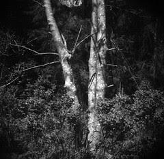 ICCD 2011 : tree & gestrypp