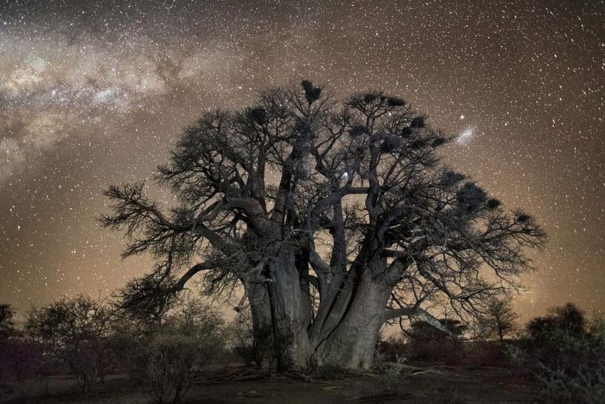 fotos-arboles-viejos-noche-estrellas-beth-moon (10)