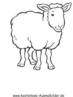 Ausmalbilder Schaf 3 - Tiere zum ausmalen | Malvorlagen Schafe