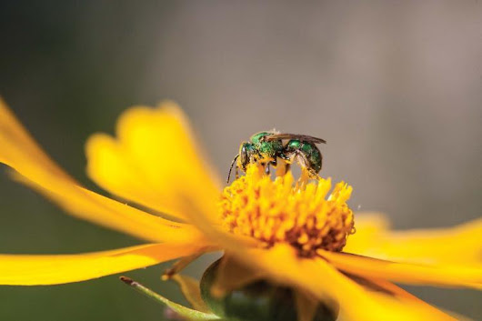Discover Nature: National Pollinator Week