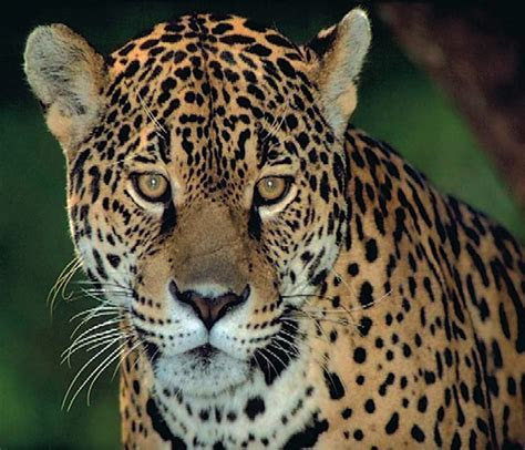 The Pantanal ? Brazil?s top wildlife region
