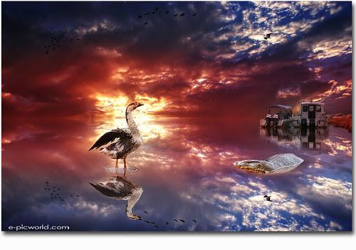 sunset, duck, iguana composite image