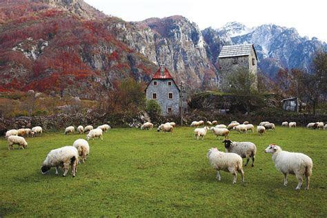 Albania Mania   Modern Farmer