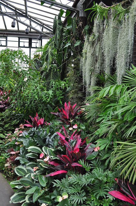 Conservatory - Tropical Terrace (2)