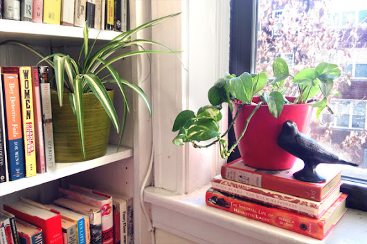 Sick of Winter? These Houseplants Will Perk Up Your Mood (Yes, Really)
