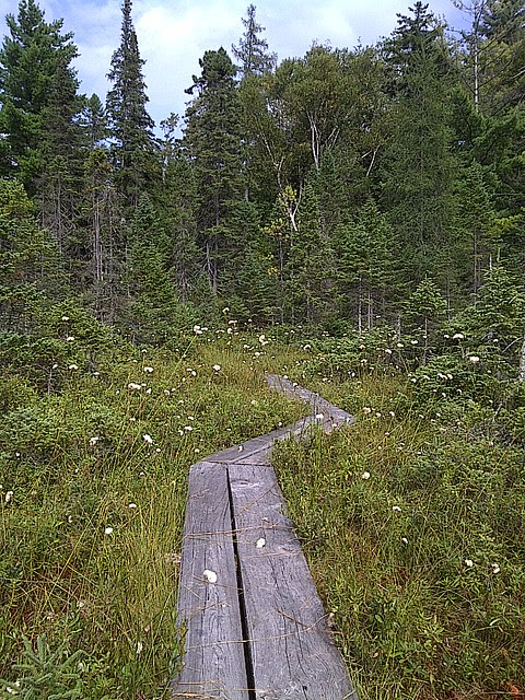 The plank trail