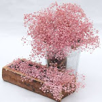 60 Light Pink Baby's Breath by GlobalRose