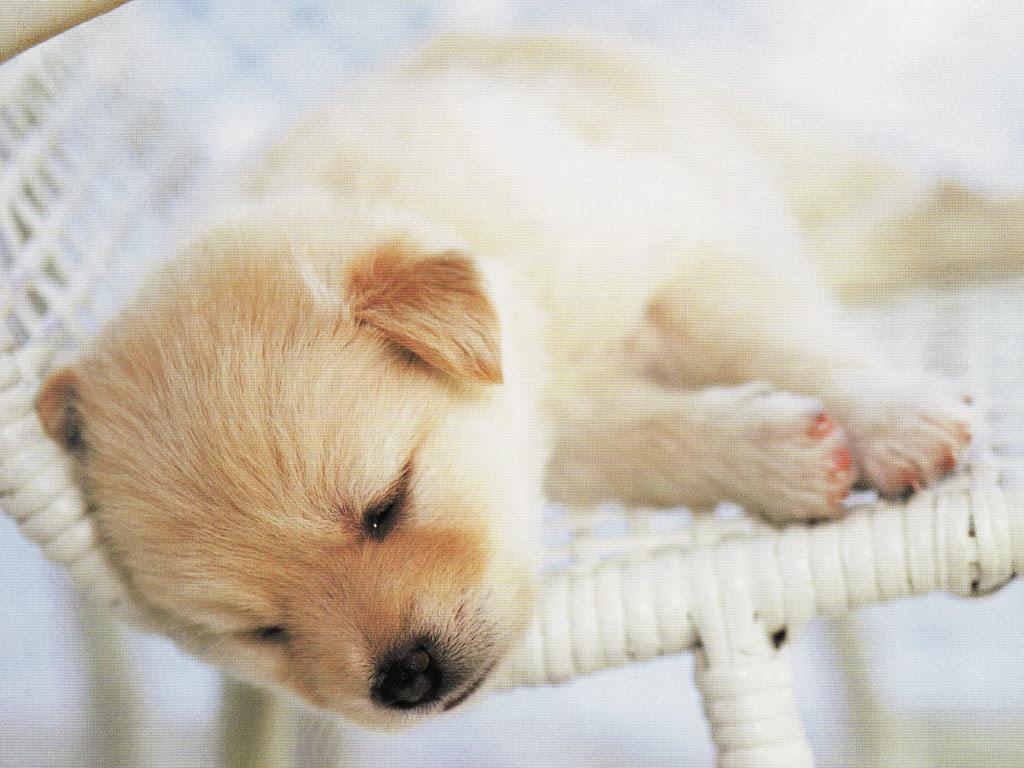 動物 かわいい犬 壁紙集 癒し画像 動物 かわいい犬 壁紙集