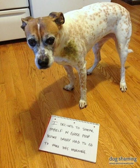 6.17.16 - Dog Shaming - Father's Day Edition3