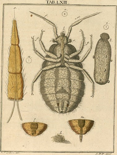 Amusement microscopique MF Ledermuller 1766 1