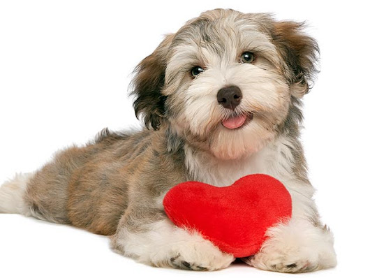 Show Your Dog Some Love This Valentine's Weekend