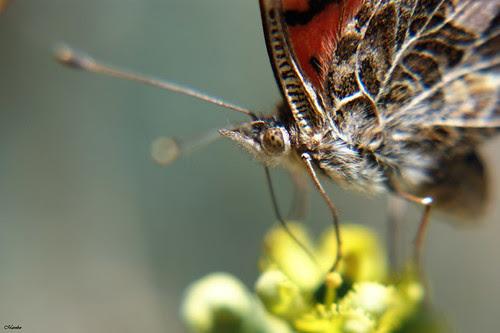 Macro mariposa, butterfly by Alejandro Bonilla