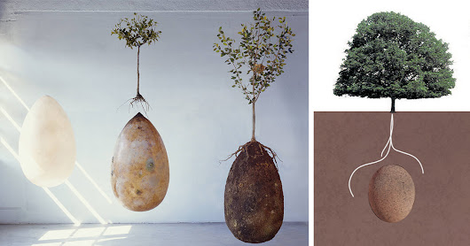 Forget Coffins – Organic Burial Pods Will Turn Your Loved Ones Into Trees