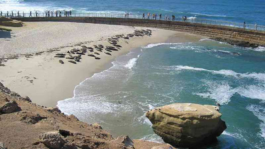 La Jolla Children's Pool to Remain Open Again During Seal Pupping - Times of San Diego
